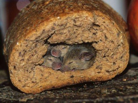 Роспотребнадзор отмечает улучшение качества хлеба за последние пять лет