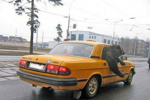 Если такси считать служебным транспортом, то расходы на поездки в такси можно учесть