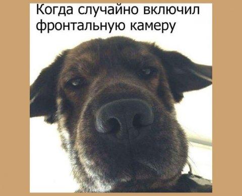 """""""Заходишь"""" на регистрацию ИП с мобильника - госпошлину 800 рублей надо заплатить"""