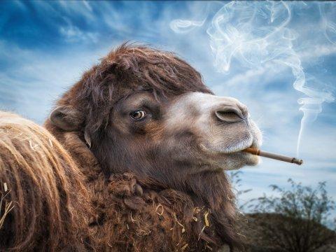 Минздрав выступил за одинаковые ограничения для электронных и обычных сигарет