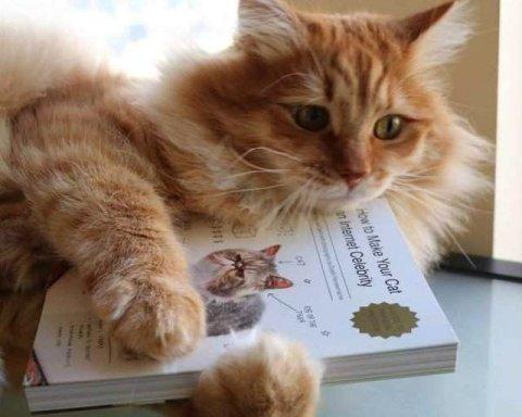 Выдачу работнику бланка трудовой книжки можно вписать в книгу продаж