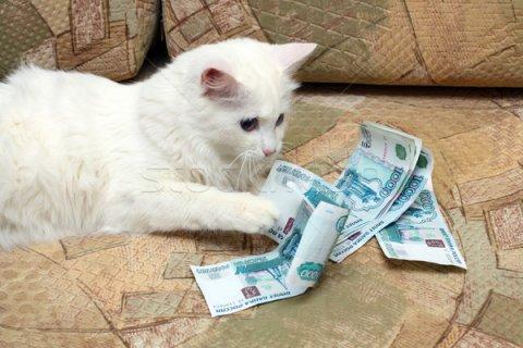 На сайте ФНС заработал сервис для уплаты налогов за другого
