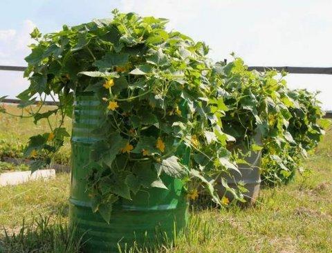 Владельцам личных огородов дадут право, став ИП, применять ПСН: законопроект