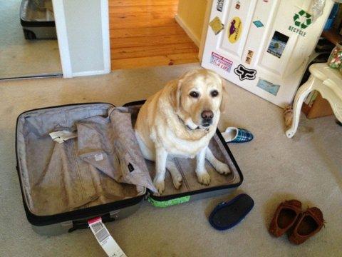 Частые поездки гражданина за границу с ввозом товаров могут привести к НДС